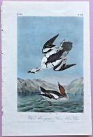 1843 WHITE MERGANSER/NUN from Audubon's BIRDS of AMERICA1st Ed/Octavo Pl #444