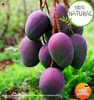 Mango Bonsai Delicious Seeds Plants Fruit Mangifera Indica Perennial 1pcs
