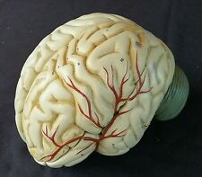 Used A. J. NYSTROM & Co Scientific Human 3 Part Brain Model Anatomical  Anatomy