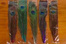 Peacock Eyes for Fly Tying - 5 different colors!