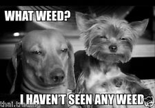 """Funny Dog Weed  Animal Photo Fridge Magnet 2""""x3"""" Collectibles"""