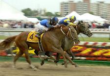 2007 Robby Albarado CURLIN Preakness Stakes Horse Racing 8x10 Photo Street Sense