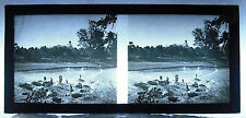 Photographie stéréoscop colonies Afrique 1900 des puits Well scène de vie Africa