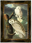 Audubon SNOWY OWL Wood Framed Canvas Print Repro 19x28