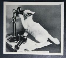 Cat On An Old Fashioned Phone      Original Vintage Photo Card