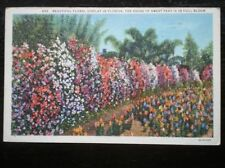 Florida Posted Collectable USA Postcards