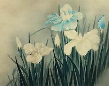 Circle of Lowell Blair Nesbitt, Iris Flowers 2 – mid-20th-century watercolour