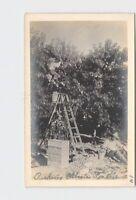 RPPC REAL PHOTO POSTCARD GEORGIA PICKING ELBERTA PEACHES WORKERS LADDERS CRATES