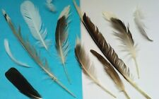 NATURAL FEATHERS x12 SEAGULL LARGE +Medium  FREE fallen feathers UK seller