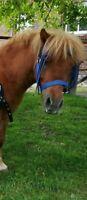 Abschwitzdecke 95cm Shetty Shetland Pony Pferdedecke Türkies Widerristpolster