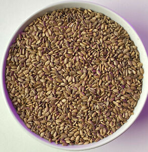 16oz Wildcrafted MILK THISTLE SEED WHOLE Normalizes Liver Function Potent