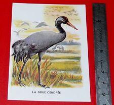 CHROMO ECOLE BON POINT IMAGE 1960-1970 OISEAU GRUE CENDREE  ANIMAUX F. NATHAN