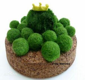 Mini Small Moss Balls Aquarium Fish Tank Fresh Water Plant Ornament Decoration