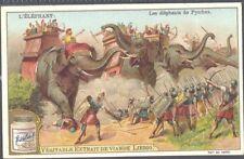 Liebig - The Elephant S701 (French) - The Elephants of Pyrrhus