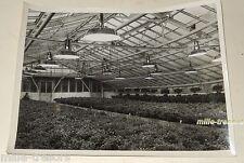 REPORTAGE PHOTO : SERRES chez ROYER Horticulteur - Compagnie des Lampes MAZDA 4