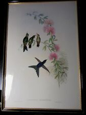 John Gould Original Antique HUMMINGBIRD Hand Coloured Framed Lithograph