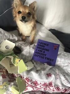 Cards Of Shame For Bag Or Naughty Dogs Puppy Dog Owner Gift