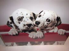 CUTE DALMATIANS DOGS PUPPIES 16x20 Animal Photo Picture Print