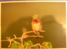 Bird Real Photographic (RP) Collectable Animal Postcards
