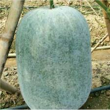 50pcs Benincasa hispida vegetable Seeds