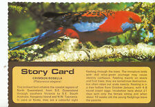 Animal Postcard - Bird - Crimson Rosella - [Platycercus Elegans]    AB1807