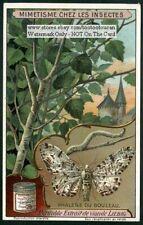 Butterfly Phalene Du Bouleau Camouflage 1915 Trade Ad Card