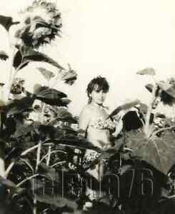 1980s Beautiful Young Woman Breast Bikini Bare Figure Sunflowers Russian photo