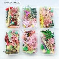 Mixed Color 3D Real Dried Flower Plants Pressed Flowers Making Crafts DIY Decals