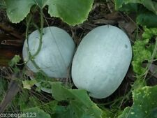 Winter Melon / Wax/ White/ Ash Gourd 30 vegetable/ fruit seeds (10 Nos) X-071