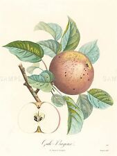 BOCQUET FRENCH GALO BAYEUX APPLE ZOOLOGY PRINT POSTER BB5016A