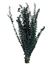 Preserved Fragrant Baby Eucalyptus Branches Green 16 oz