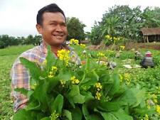Choy Sum, Choi Sum, Yu Choy, Chinese Flowering Cabbage 2000 seeds