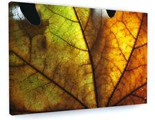 STUNNING AUTUMN WOODLAND TREE ORANGE LEA CANVAS PICTURE PRINT CHUNKY FRAME #4144