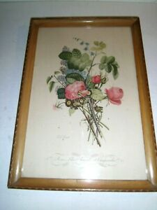 Vtg J. L. Prevost Botanical Floral Print Lithograph No. 4 Blonde Frame 1930s-40s