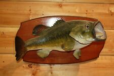 Real Skin Mount Largemouth Bass Smallmouth Walleye Pike Fish Taxidermy FLM60