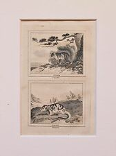 Buffon Antiguo montado impresión c.1800 - grabado-zarigüeya & squrrel