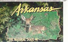 Arkansas  White Tail Fawn      AR  Unused Postcard 1315S