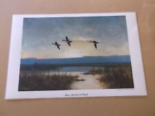 "Vintage 1953 Peter Scott ""Three Pintails at Dusk"" Duck Print"