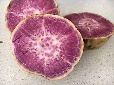 Hawaiian Purple Sweet Potato x5 Unrooted Plants/ Stem Cuttings --FREE POSTAGE