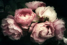 STUNNING Shabby Chic Pink Rose Flowers Canvas Picture #856 Wall Hanging Art A1
