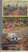 Vintage Scenic Postcards Circa 1800's-1900's Lot of 5 Pink Flamingos *