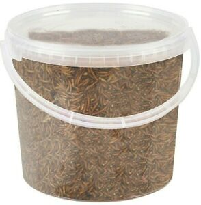 Premium Dried Mealworms 5 Litre - Wild Bird Food Large Small High Quality Worm