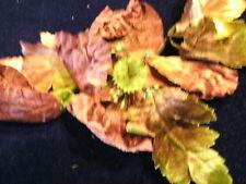 Vintage Millinery Flower Velvet Poppy Taupe Brown KL9