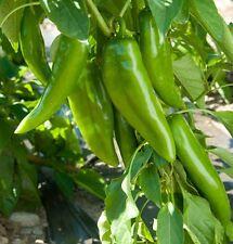 Ungarische Numex Joe E Parker Paprika, sehr milde Schärfe, 10 Samen