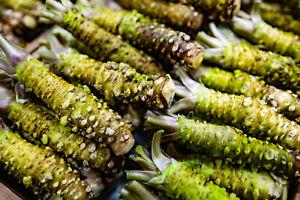 Wasabi Seeds - Eutrema Japonicum - Genuine Wasabi - 15 seeds