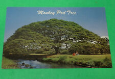 Hawaiian Monkey Pod Tree  1951 Postcard  - Hawaii