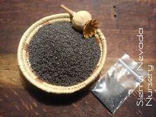 Poppy Somniferum Seeds 1/8 oz 7500+ seeds blue Afghan Organic Non Gmo .