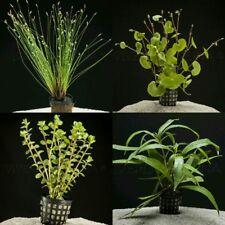 PLANTA DE ACUARIO: LOTE DE 4 PLANTAS