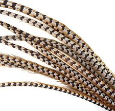 "5 Pcs REEVES PHEASANT Natural Feathers 10-16"" ; Halloween/Bridal/Hats/Burlesque"