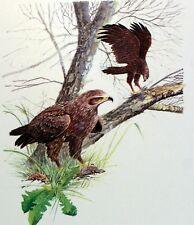 Animal Kingdom Hungary Hungary Raptor Wwf Bird Panel Pad Premier Day 1° Fdc 2803 Topical Stamps